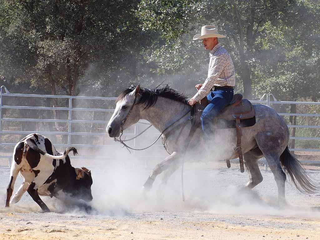 http://azur.quarter.horses.free.fr/images/cutting-quarter-horse.jpg